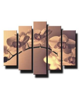 5 dielny obraz jemna orchidea