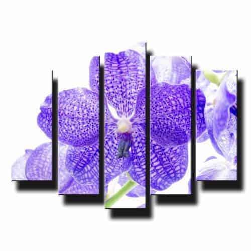 5 dielny obraz na stenu orchidea fialová