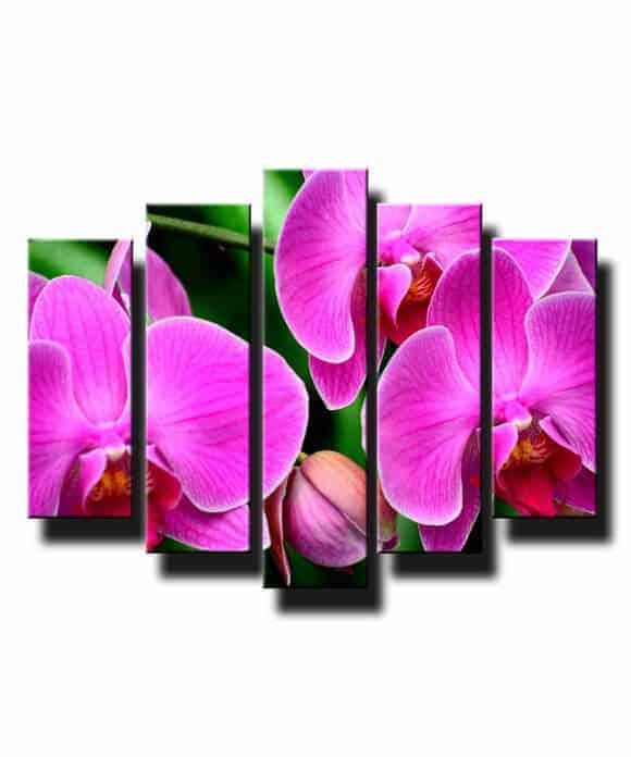 5 dielny obraz na stenu orchidea ružová